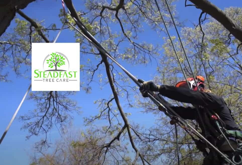 Steadfast Tree Care Spotsylvania Featured Image