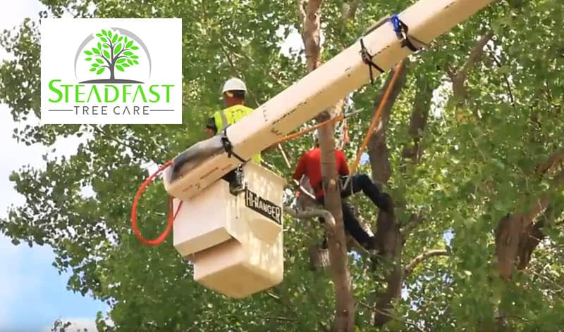Steadfast Tree Care Stafford Virginia