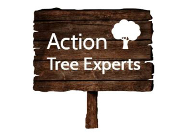 Action Tree Experts