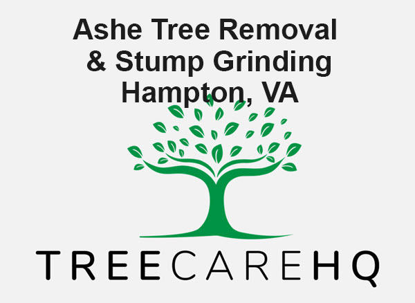 Ashe Tree Removal & Stump Grinding