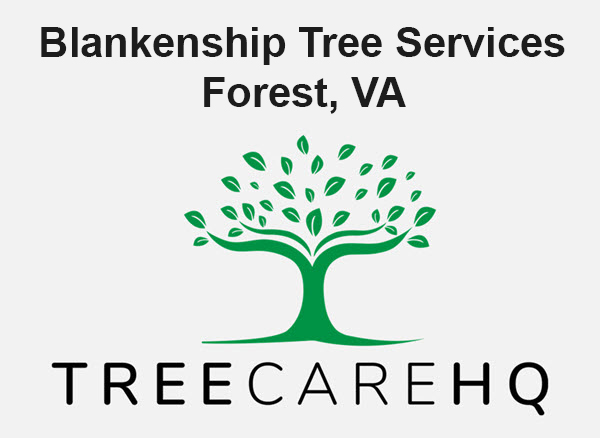 Blankenship Tree Services