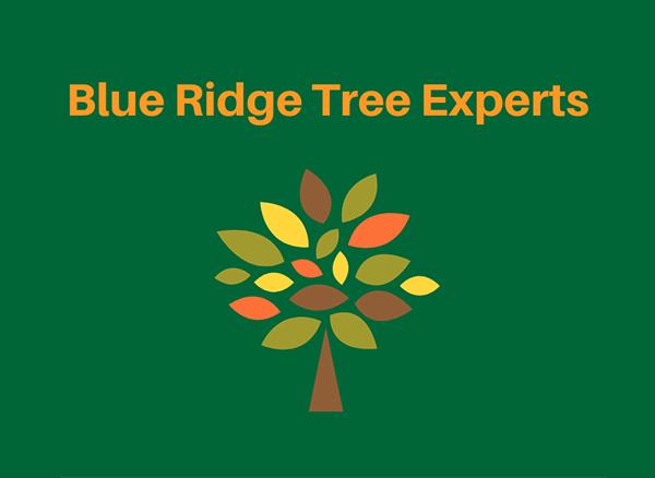 Blue Ridge Tree Experts