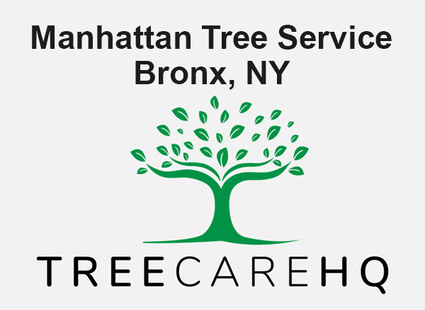 Manhattan Tree Service