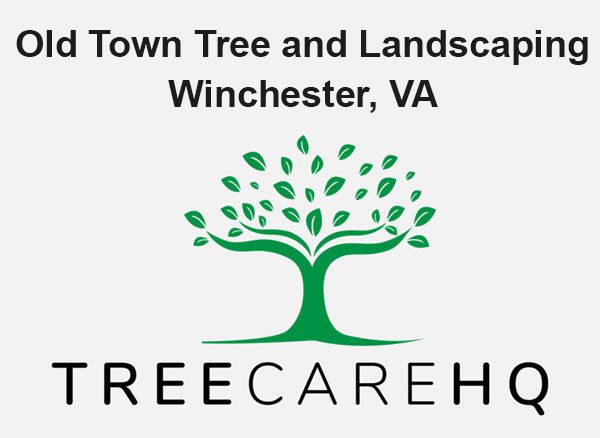 Old Town Tree and Landscaping