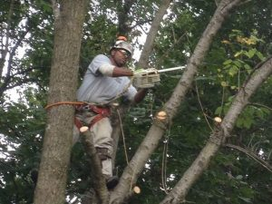 Tree removal being completed by Simon Gatling of Gatling Tree Service Culpeper