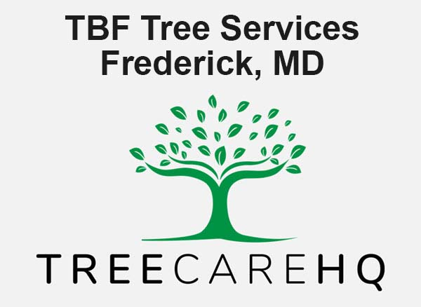 TBF Tree Services