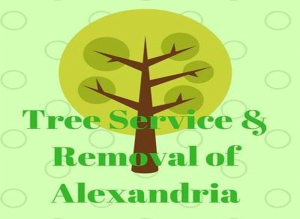 Tree Service & Removal of Alexandria
