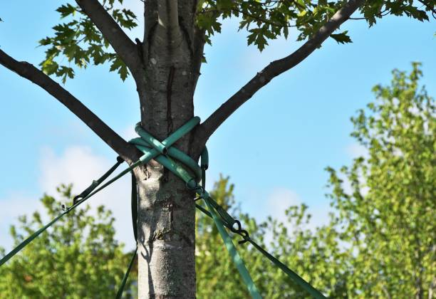 tree cabling