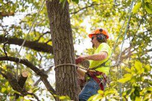 winchester tree service