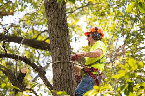 TreeCareHQ Winchester Opens to Provide Tree Services