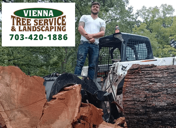 Vienna Tree Service & Landscaping on TreeCareHQ